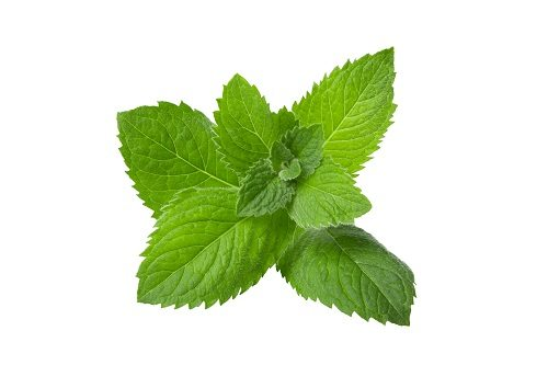 Peppermint History - Exploring the Historical Roots