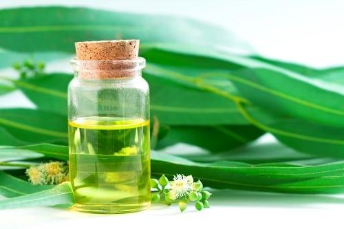 10 Fantastic Home Uses Of Eucalyptus Oil
